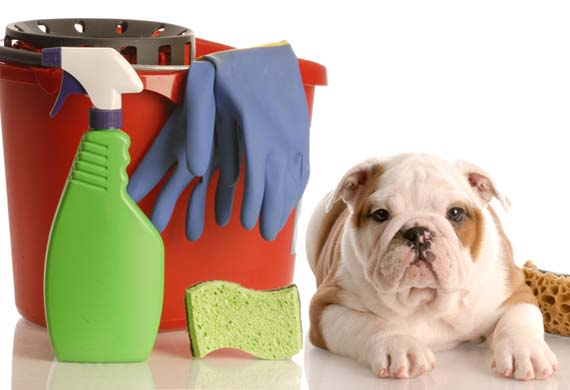 Tips For Keeping Your House Clean With Dogs